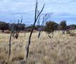 photo, kangaroo in field